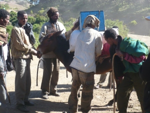Loading up donkeys for the Simien Trek