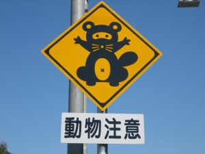 japan_raccoon2