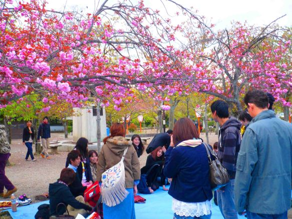 Party in the park under cherry blossoms
