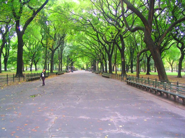 Tree lined avenue in Central Park
