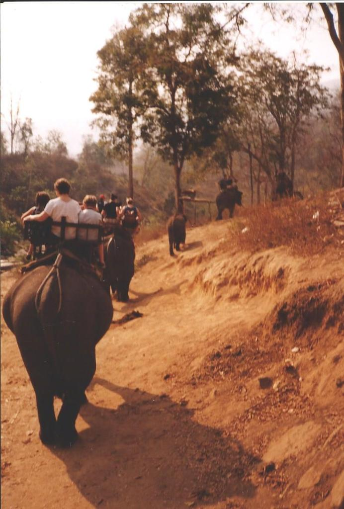 Elephant trekking - part of the quintessential Thailand experience now for a long time.