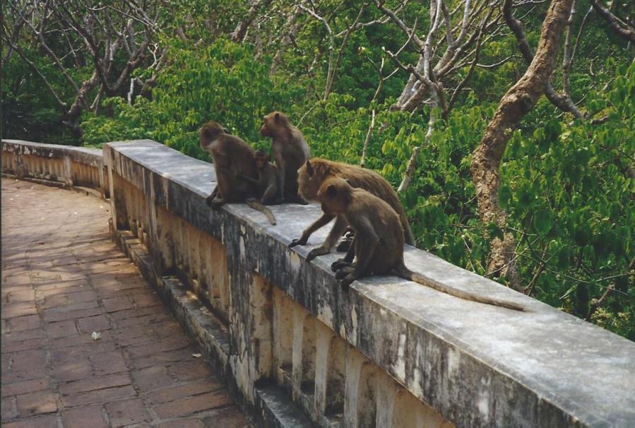 Argh! Monkeys!