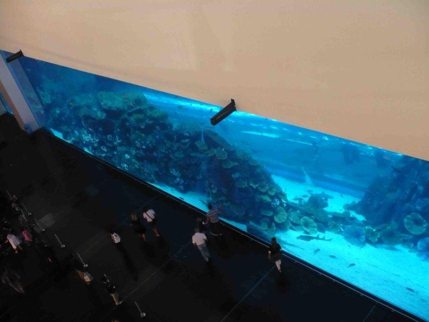 An Aquarium in a mall!
