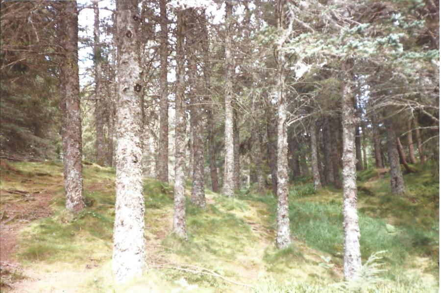 Norwegian Wood. Near Bergen.