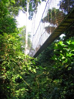 Rope walkway high in the trees at Kakum National Park.
