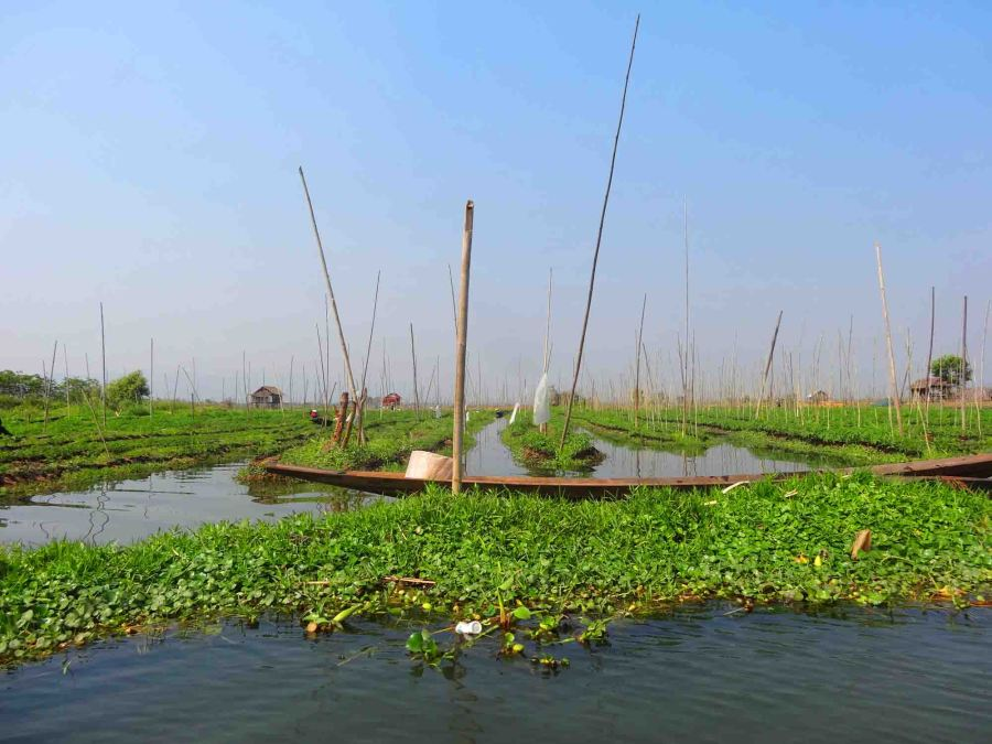 Floating gardens.