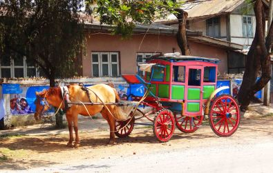 Horse and Carriage in Pyin Oo Lwin
