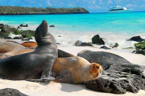 islas-galapagos-ecuador-galapagos-islands-ecuador+1152_12972078733-tpfil02aw-12879