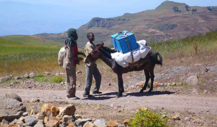 donkey on the simien mountains