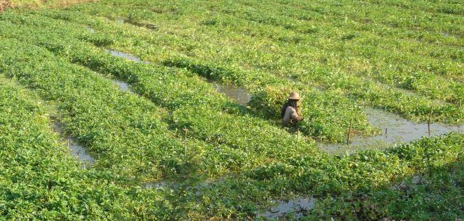 Farmer in the field. The wet field.