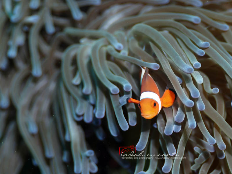 Underwater Photography by Indah Susanti
