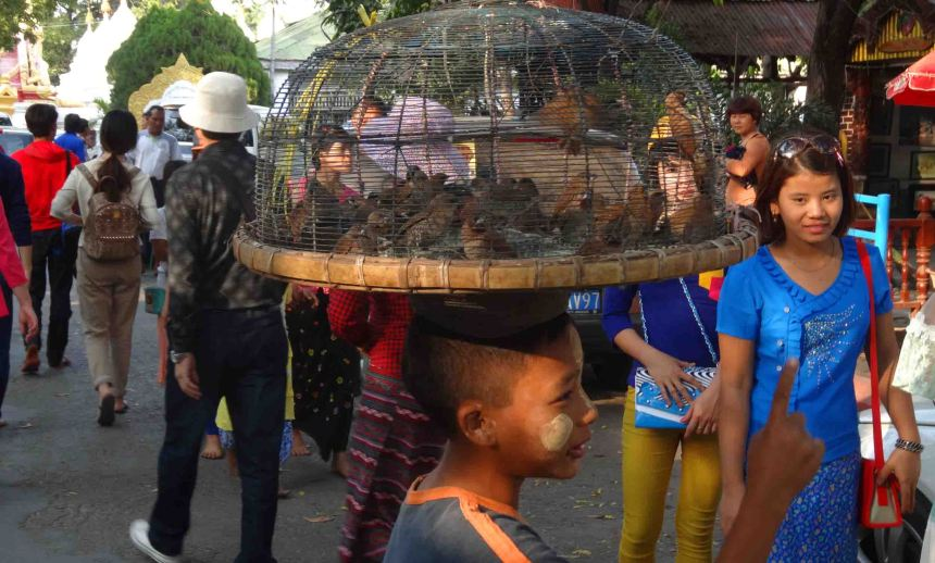Who will buy these birds? In Mandalay.