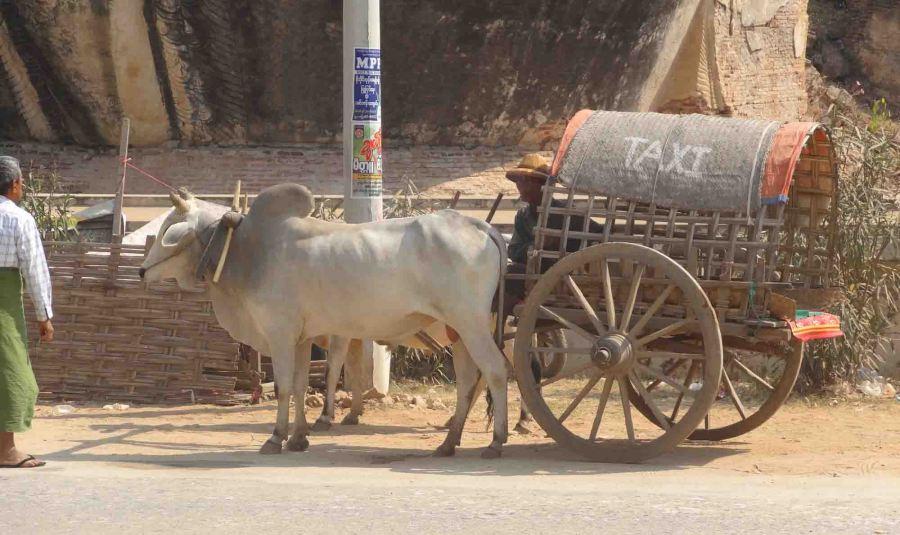Anyone order a taxi? In Mingun.