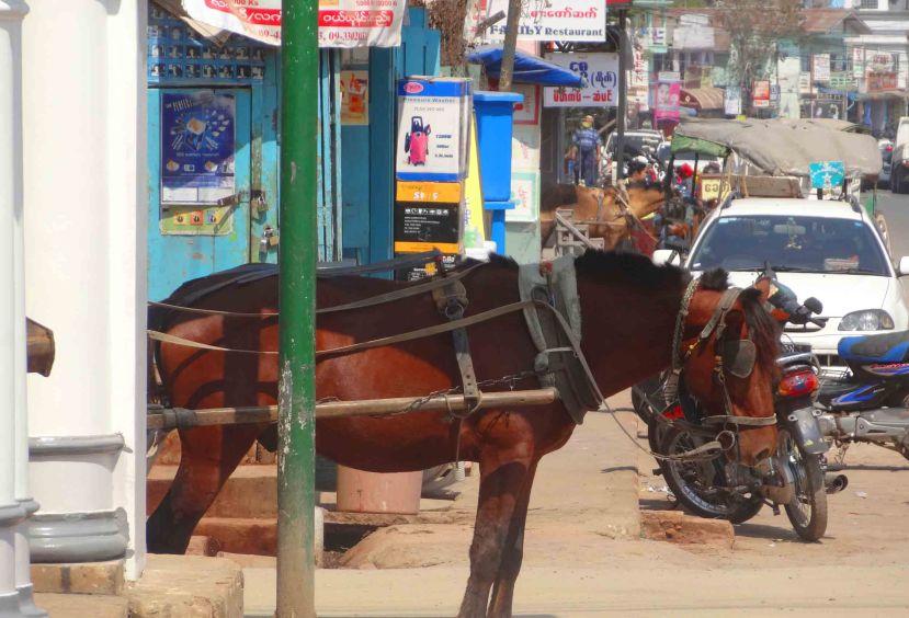 Horse in Pyinn Oo Lwin.