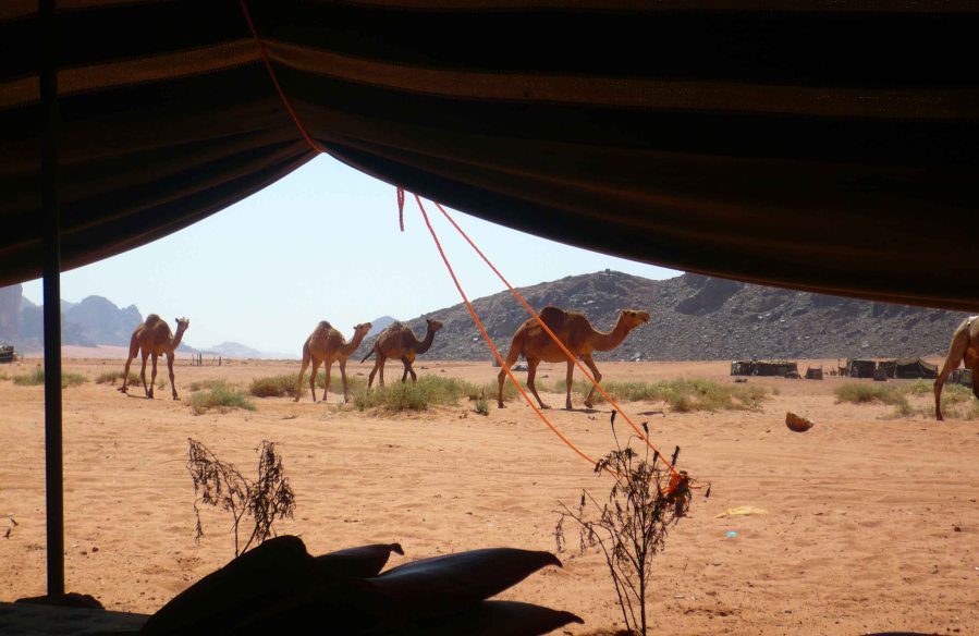 View out of the tent at Lawrence's Spring. You can indeed ride a camel if it is so your wish. It was not mine.