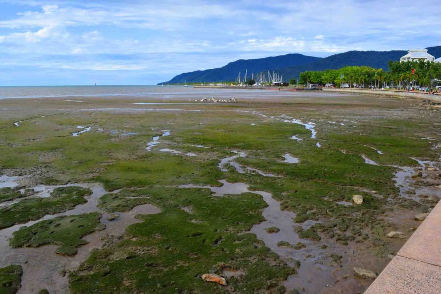 low tide at cairns