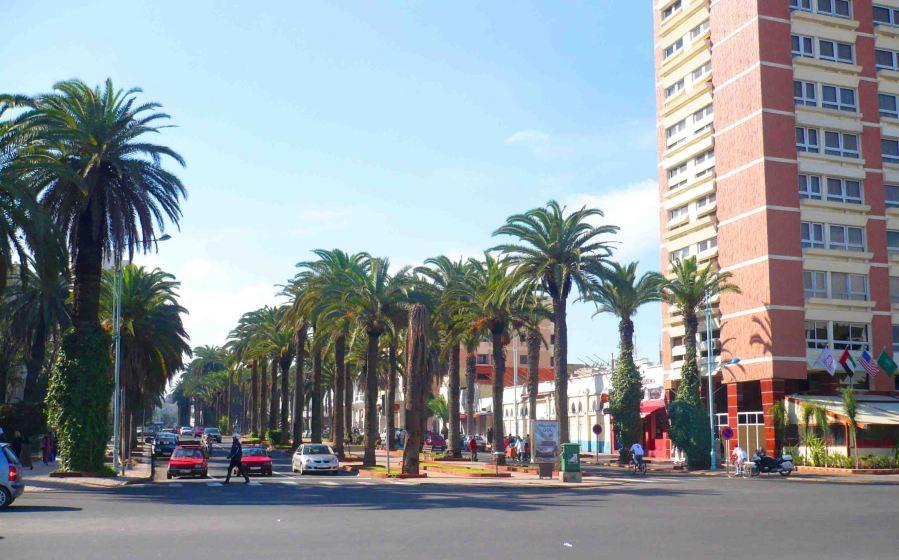 Casablanca's palm trees.