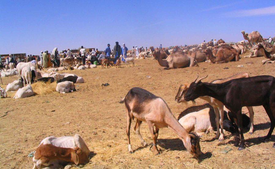 Animals at the market.