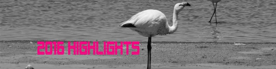 2016-highlights-banner-copy