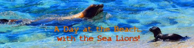 banner-day-at-the-beach-with-the-sea-lions-copy