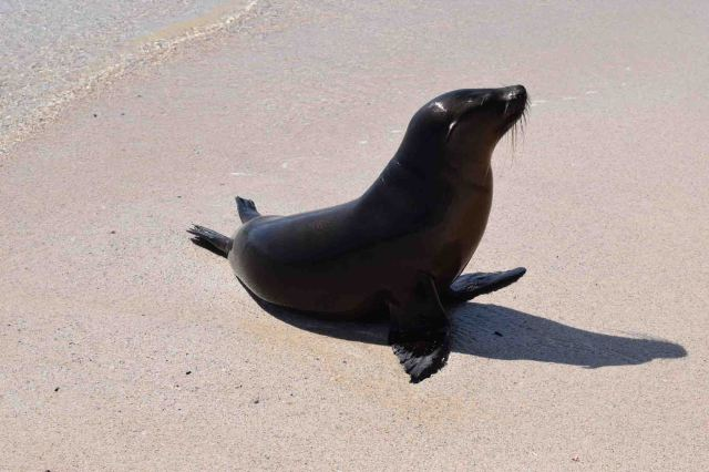 cute-sea-lion-on-the-sand