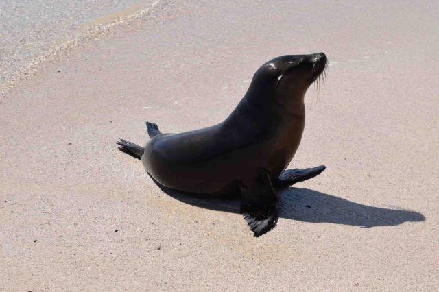 cute-sea-lion-on-the-sand