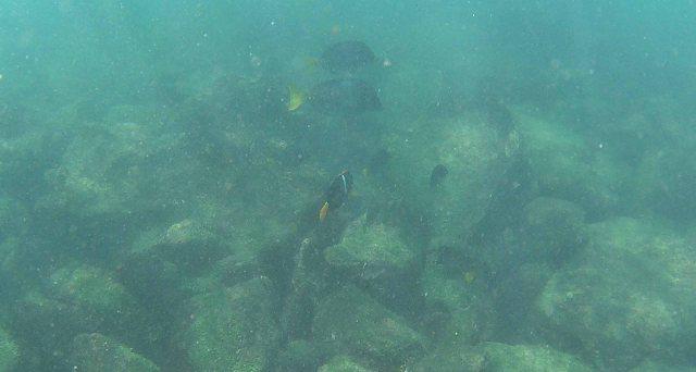 fish-san-cristobel