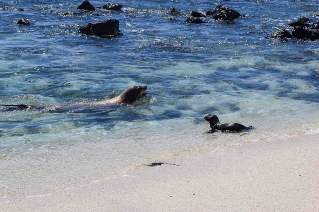 mum-and-cub-sea-lion