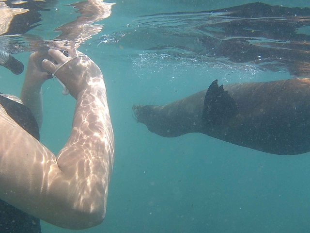 photographing-a-sea-lion
