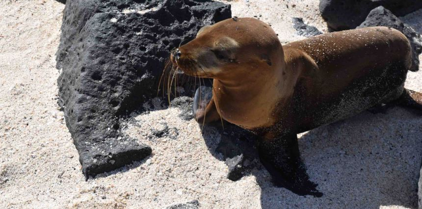 sea-lion-on-beach