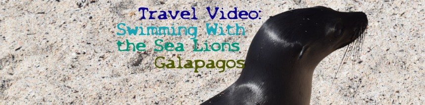banner-swimming-with-sea-lions-copy