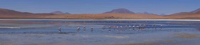 Flamingos at a sulphur-infused lake.