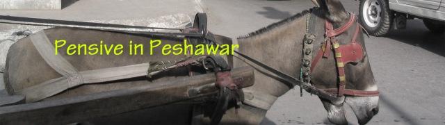 pensive in peshawar banner copy